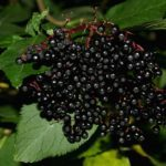 Easy InstaPot Elderberry Syrup Recipe That Will Change Your Life!