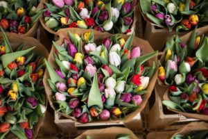 bouquets of tulips showing love