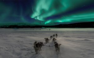 winter northern lights with snow dogs