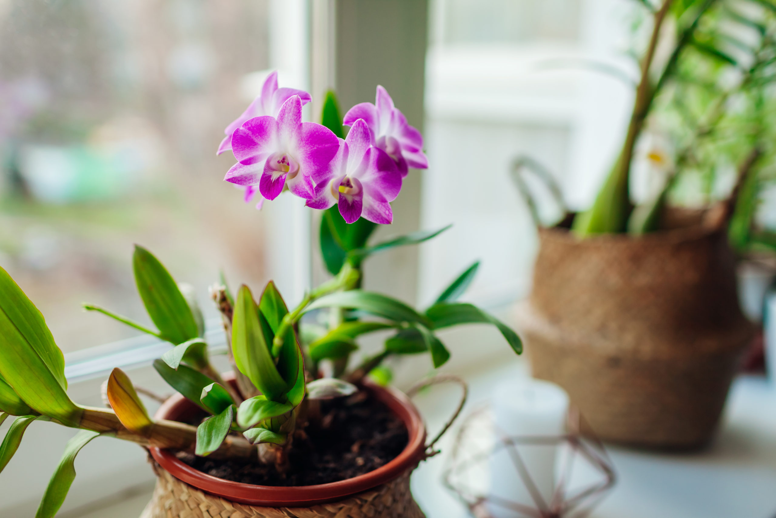 orchid in a planter