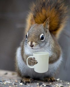 early morning squirrel with coffee