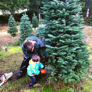 Man and little boy cutting Christmas tree down together