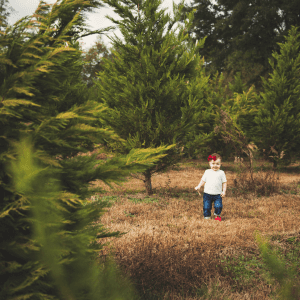 Little girl standing in a tree farm smiling