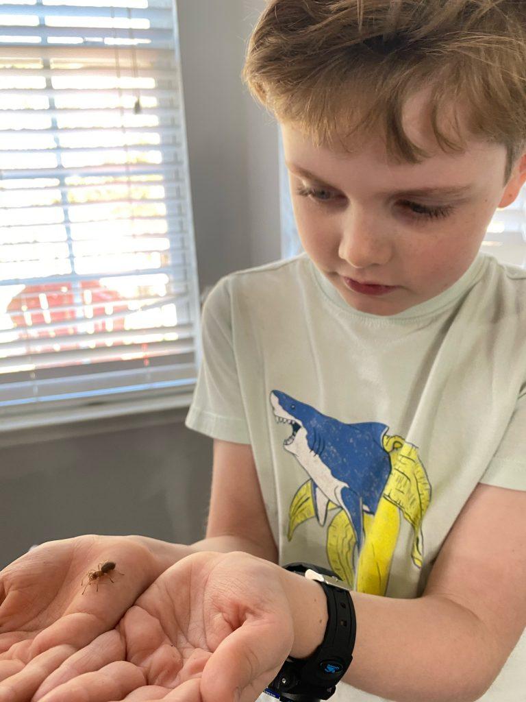 boy holding a baby tarantula