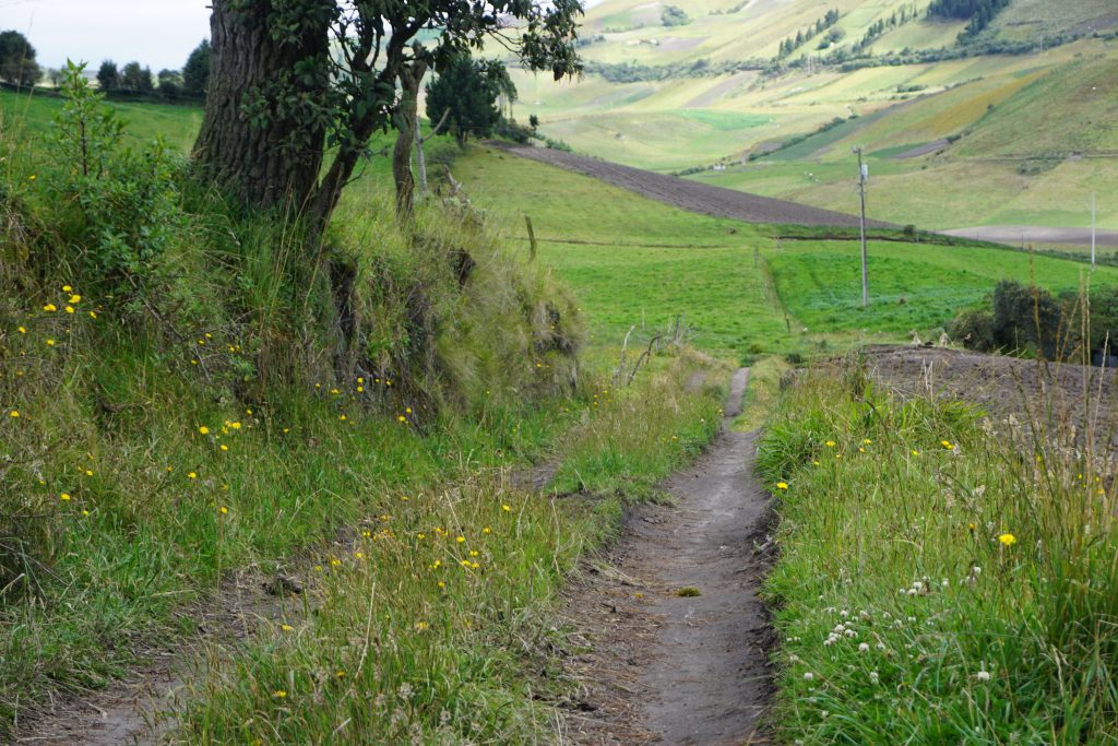 dirt road leading into a field of green with wildflowers growing on both sides
