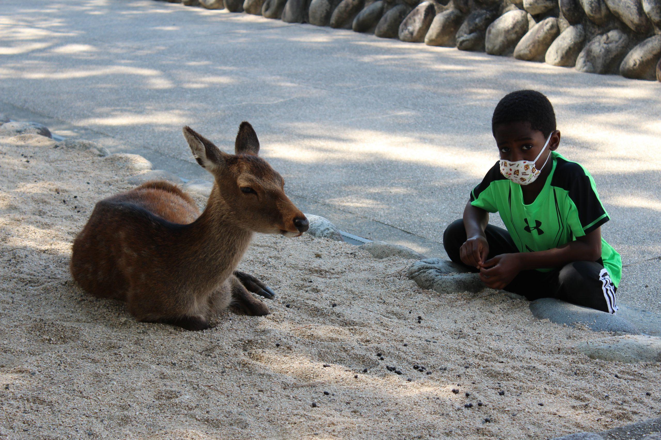 young boy sitting next to a tame deer on miyajima