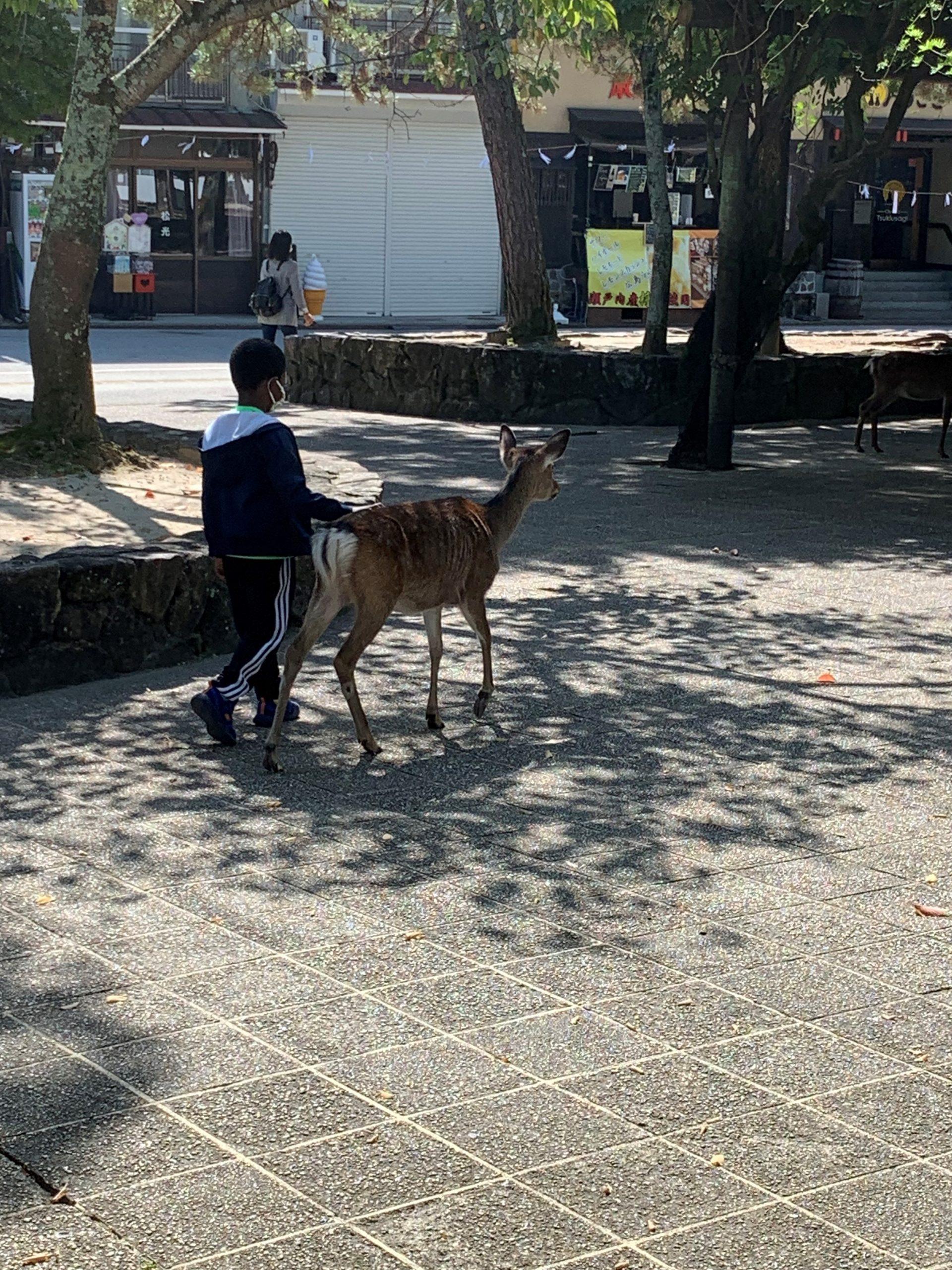 young boy walking next to a tame deer in miyajima