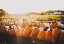 Fall scene with orange and white pumpkins